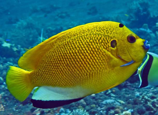 Protaras tengeri akvárium Ciprus